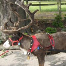 hiring our reindeer