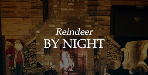 reindeer by night