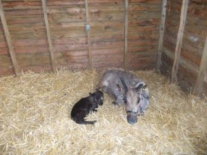 The Arrival of Baby Reindeer at Blithbury Lodge
